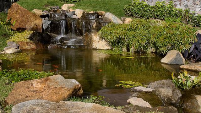 Natural pond water garden
